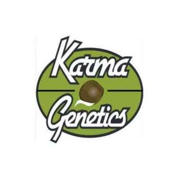 graines Régulières Dominator de collection