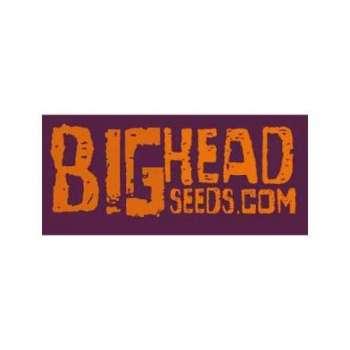 graines Féminisées Heavyhead de collection