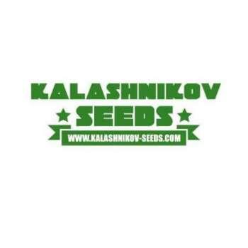 graines Féminisées Kalashnikov Express de collection