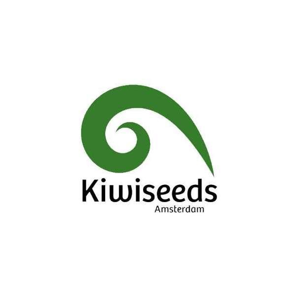 graines Régulières Kiwiskunk de collection