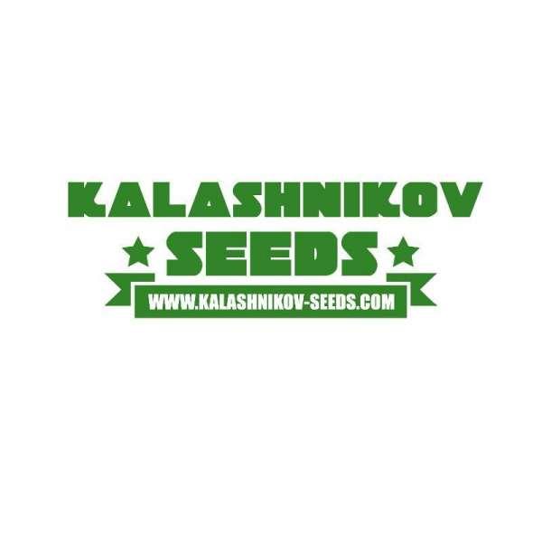 graines Féminisées Kubanskiy Ubiyza de collection