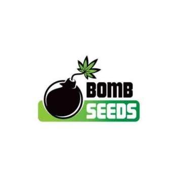graines Féminisées Kush Bomb de collection