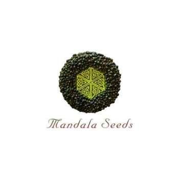 graines Régulières Mandala 1 de collection