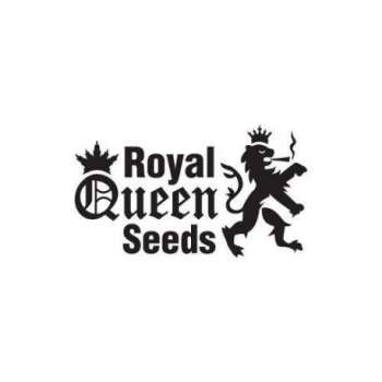 graines Féminisées Royal Cheese Fast de collection