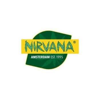 graines Régulières Sativa' Sour Diesel de collection