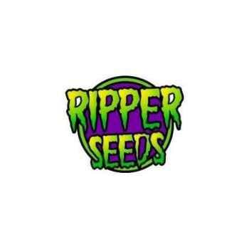 graines Féminisées Sour Ripper de collection