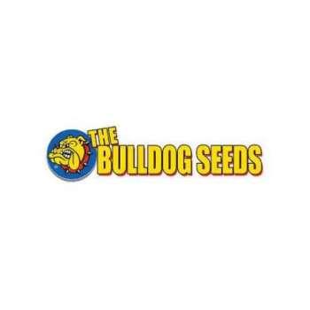graines Régulières The Bulldog Skunk de collection