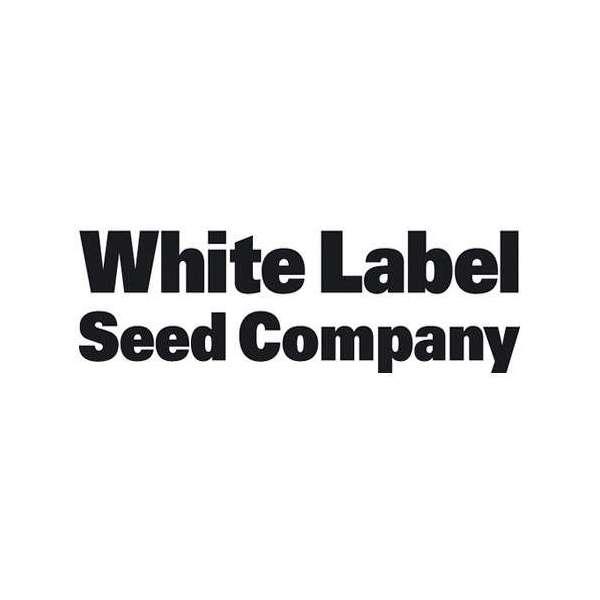 graines Régulières White Label Rhino de collection