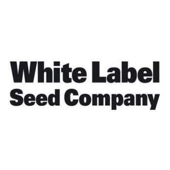 graines Régulières White Widow de collection