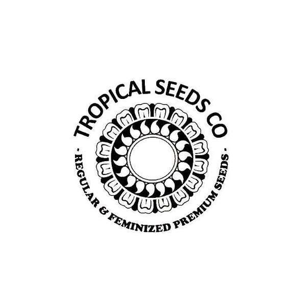 graines Régulières Zambian de collection