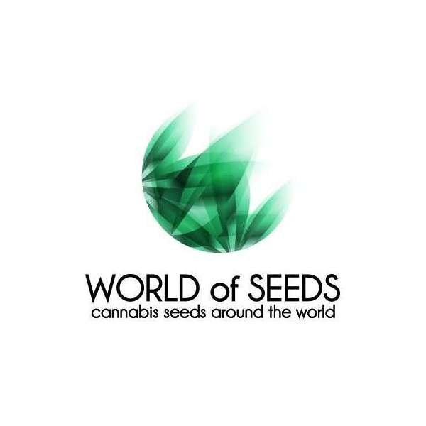 graines Régulières Afghan Kush Wos de collection