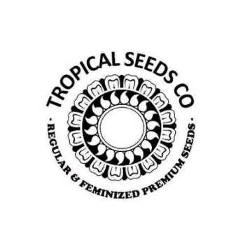 graines Féminisées Afrokush de collection