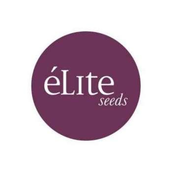graines Féminisées Blue Elite de collection
