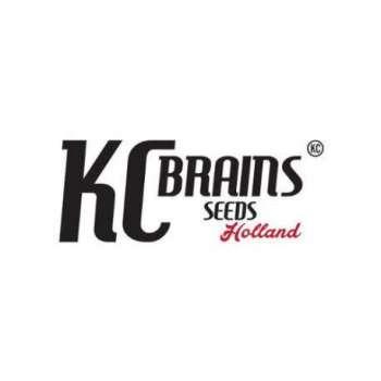 graines Régulières Brains Damage de collection