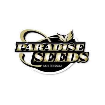 graines Féminisées Champions Pack de collection